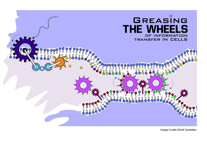 Greasing the wheels of information transfer in cells