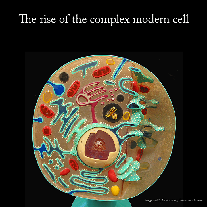 The rise of the complex modern cell
