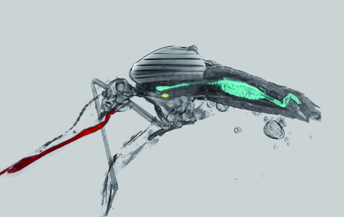 Insect Flight Muscles: as they really are