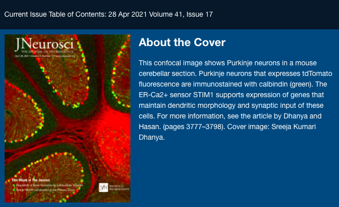 Purkinje Neurons in Mouse Cerebellum Make the Journal of Neuroscience Cover
