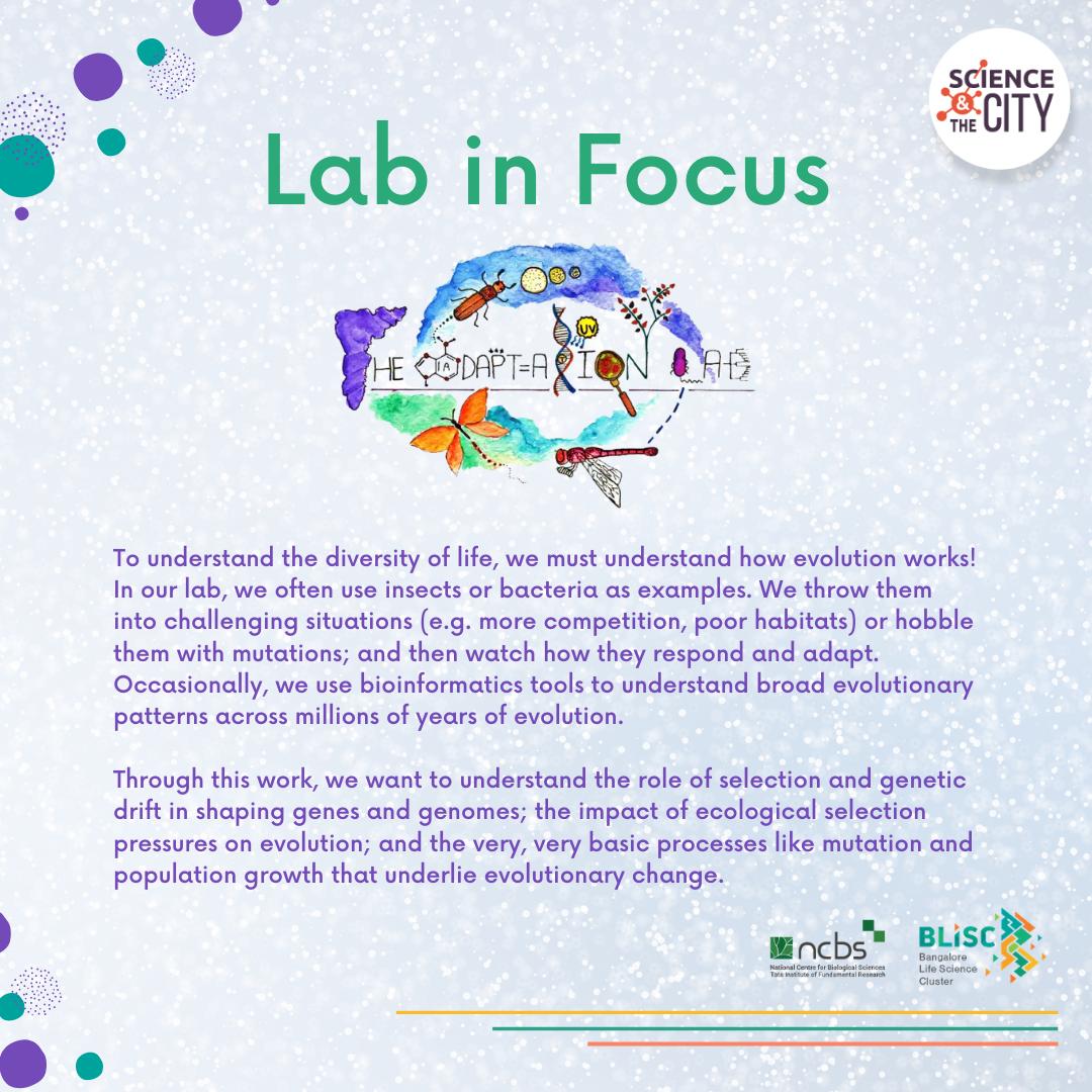 Lab in Focus: Adaptation Lab