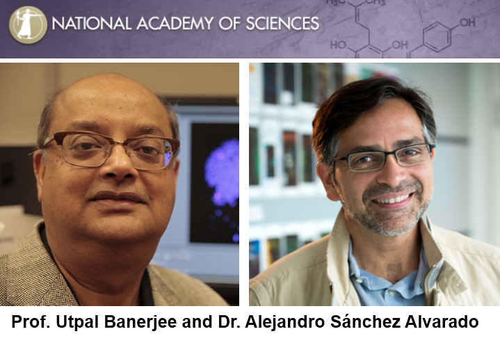 Congratulations to Prof. Utpal Banerjee & Dr. Alejandro Sánchez Alvarado - elected to the National Academy of Sciences in 2018