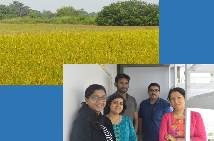 NCBS team identifies a tiny molecule in rice that facilitated domestication from wild grass