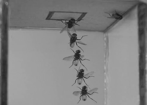 The fly on the wall: ever wondered how it lands there?