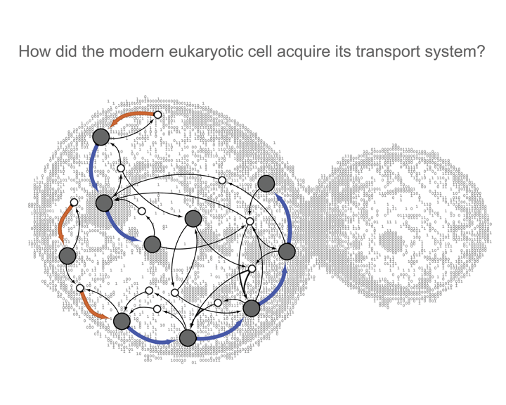 How did the modern eukaryotic cell acquire its transport system?