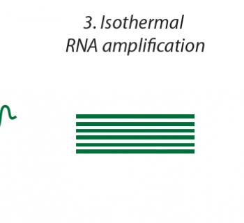 PHANTOM Diagnostic Tool for SARS-CoV-2 Infection