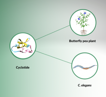 Tackling cognition with an ornamental plant
