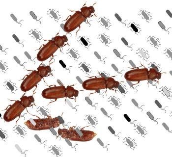 Of Bugs and Beetles: 