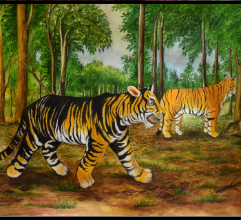 What makes the black tigers of Similipal black?