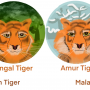 Tigers Across the World