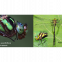 TWO NEW SPECIES OF DRAGONFLY DISCOVERED IN NORTH-EASTERN INDIA