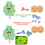Protein modifications hold the key to success of plant viruses